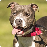 Adopt A Pet :: Tip - Kettering, OH