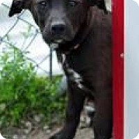 Adopt A Pet :: Zola - Pleasant Plain, OH