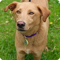 Adopt A Pet :: Molly - Chester Springs, PA