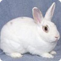 Adopt A Pet :: Ivy - Encinitas, CA