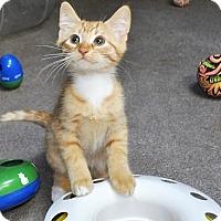 Adopt A Pet :: Patriot - Princeton, MA