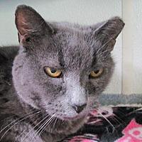 Adopt A Pet :: Slate - Cumberland, ME