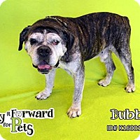 Adopt A Pet :: Gander - Sharon Center, OH