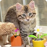 Adopt A Pet :: Georgie Boy - Davis, CA