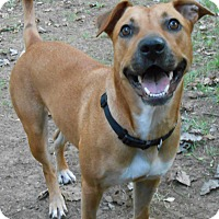 Black Mouth Cur Mix Dog for adoption in chicago, Illinois - April