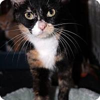 Adopt A Pet :: Nugget (SLK) 2.1.16 - Orlando, FL
