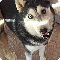 Adopt A Pet :: Renee - Las Vegas, NV