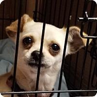 Adopt A Pet :: LIZA - Gustine, CA