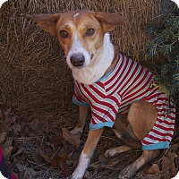 Adopt A Pet :: Bailey - Bishopville, SC