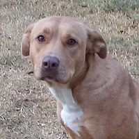 Adopt A Pet :: Louise - Glenwood, GA