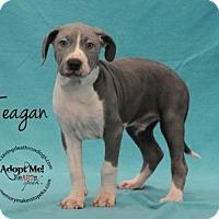 Adopt A Pet :: Teagan - Topeka, KS