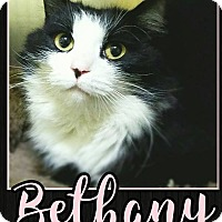 Adopt A Pet :: Bethany - Edwards AFB, CA