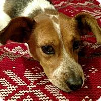 Adopt A Pet :: Maci - Huntsville, AL