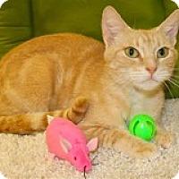 Adopt A Pet :: Cate - Atlanta, GA