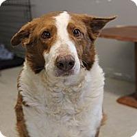 Adopt A Pet :: Maxwell - Pflugerville, TX