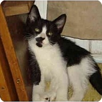 Adopt A Pet :: Charlie - Davis, CA