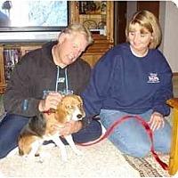 Adopt A Pet :: Katy - Novi, MI