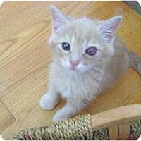 Adopt A Pet :: Deckster - Westfield, MA