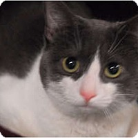 Adopt A Pet :: Noodles - Lunenburg, MA