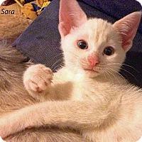 Adopt A Pet :: Sara - Crane Hill, AL