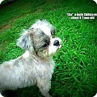 Adopt A Pet :: Eko - Gadsden, AL