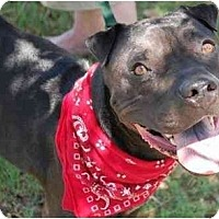 Adopt A Pet :: Merrick - Gilbert, AZ