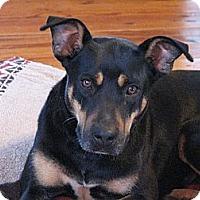 Adopt A Pet :: Pria - Adoption Pending - Spartanburg, SC