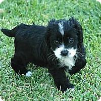 Adopt A Pet :: Jan - La Habra Heights, CA