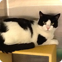Adopt A Pet :: Holstein - Colmar, PA