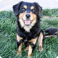Adopt A Pet :: Lionel - Yorba Linda, CA