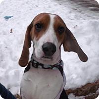 Adopt A Pet :: Skylar - Muskegon, MI
