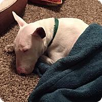 Adopt A Pet :: Terry - Houston, TX