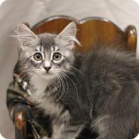 Adopt A Pet :: Mister - Sacramento, CA