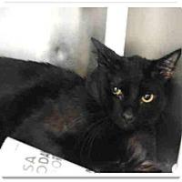 Adopt A Pet :: Vader - Only $25 adoption! - Litchfield Park, AZ