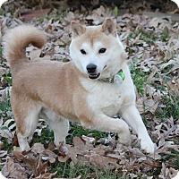 Adopt A Pet :: Ichigo - Manassas, VA