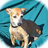 Adopt A Pet :: Bert - Blanchard, OK