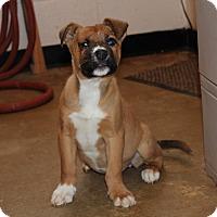 Adopt A Pet :: Magnolia - Harmony, Glocester, RI