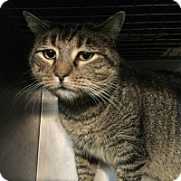 Adopt A Pet :: Muse - Trevose, PA