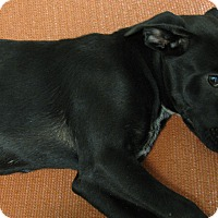 Adopt A Pet :: Farley - Groton, MA