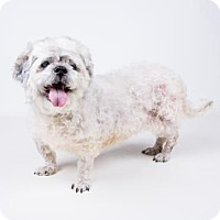 Adopt A Pet :: Poochie - adopted - Decatur, GA
