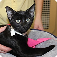 Adopt A Pet :: ONYX - Las Vegas, NV