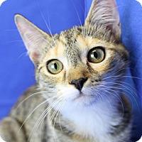 Adopt A Pet :: Mia - Winston-Salem, NC