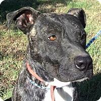 Adopt A Pet :: AA-Tigger - Tyler, TX