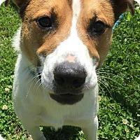 Adopt A Pet :: Zander - Liberty Center, OH