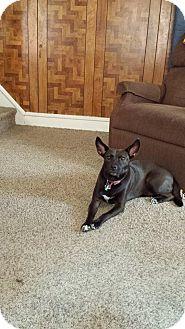 Labrador Retriever Mix Dog for adoption in Phoenxville, Pennsylvania - Mama Cinnamon