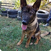 Adopt A Pet :: Sable - Louisville, KY