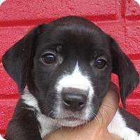 Adopt A Pet :: Eloise - Reeds Spring, MO