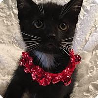 Adopt A Pet :: Faline - El Dorado Hills, CA