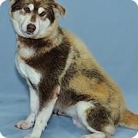 Adopt A Pet :: Tempest - Gatineau, QC