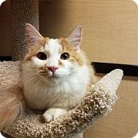 Adopt A Pet :: Del - Albany, NY
